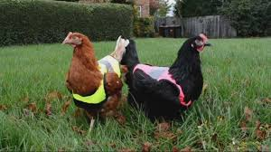 Image result for photos of australian politicians in high viz clothing