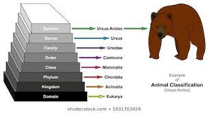 Kingdom Animalia Images Stock Photos Vectors Shutterstock