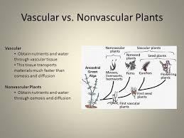 Venn Diagram Of Vascular And Nonvascular Plants Vascular Vs Nonvascular Beyin Brianstern Co