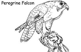 Small Picture Falcon Hunting Birds Coloring Coloring Pages