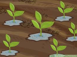 how to plant garden. image titled plant your first garden step 16 how to o