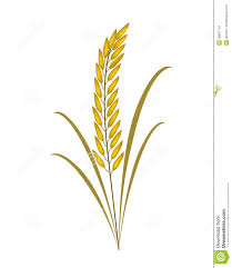 rice plant clipart. Contemporary Clipart With Rice Plant Clipart C