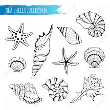 sea shells collection hand drawn sea shells and stars collection marine illustration