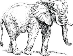 Cute Baby Elephant Drawing For Coloring Colourful Tumblr Elephants
