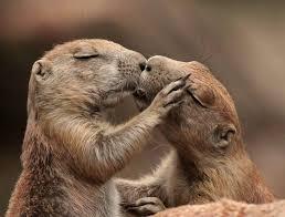 Risultati immagini per animali che si baciano