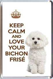 a fridge magnet with a picture of a cute bichon frise dog with the wording keep