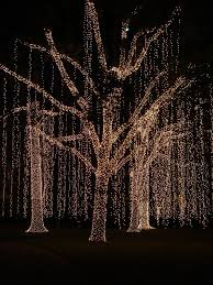 lighted trees best 25 outdoor tree lighting ideas on lights in trees wedding and garden tips
