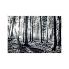 Fotobehang Bos Zwart Wit 366 Cm X 253 Cm Blokker