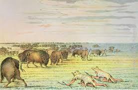 george catlin stalking buffalo