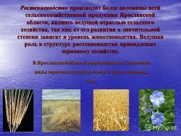 Презентация на тему Презентация Злобиной Яны Целью реферата  5 Растениеводство производит