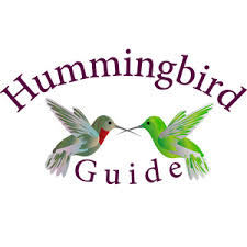 Hummingbird Facts 25 Amazing Facts About These Little Birds