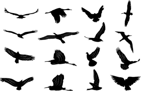 bird in flight silhouette vector. Brilliant Bird Bird Silhouettes Collection Throughout Bird In Flight Silhouette Vector N