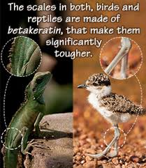 Difference Between Amphibians And Reptiles Venn Diagram Features That Birds Share With Reptiles