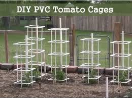 Diy tomato cage Tomato Plants Homestead Lifestyle How To Build Pvc Tomato Cages