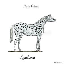 Horse Color Chart On White Equine Appaloosa Coat Color With