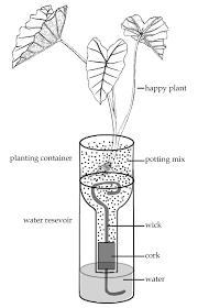 Self Watering Planter Diagram