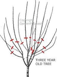 Best 25 Guava Tree Ideas On Pinterest  Plum Tree Care Pruning Plum Tree Not Producing Fruit