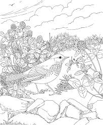 Small Picture Free Printable Coloring PageVermont State Bird and Flower