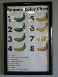 Local Wholesaler Has This Meaningless Banana Color Chart