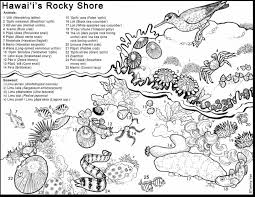 Tide Pools Coloring Pages 2019 Open Coloring Pages
