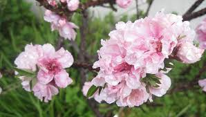 69 Best Drought Resistant Trees Images On Pinterest  Garden Southern California Fruit Trees