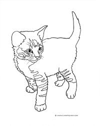 simple kitten pictures to color surprise colour cat colorin 7406 unknown
