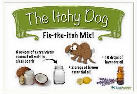 I love my dog, and I want the best for his itchy skin during allergy ...