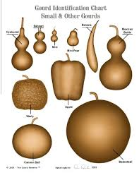 Gourd Identification Chart Charts Identifying Different Kinds Of Gourds Gourds