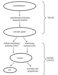 Antenatal Care Module 4 Hormonal Regulation Of The Female