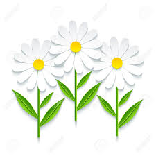 Image result for stylized daisy