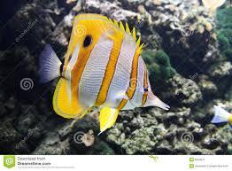 Pesci della barriera corallina immagine stock immagine: 8024271