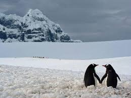 Penguin Love Quotes Custom ITweetFacts Penguins Who Are In Love Have Been Known To Sneak Away