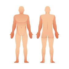 Human Body Outline Front Back Stock Illustrations 349