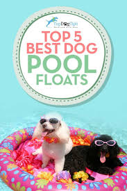pool floats for dogs. Delighful Floats Top Best Pool Floats For Dogs To Swim On Our Dogs Love Be In The Pool  But Treading Water Long Periods Of Time Will Tire Them Out On For R