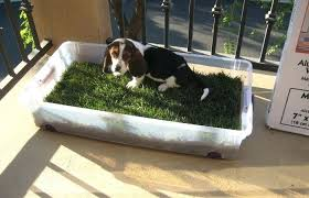 patio dog potty system systems outdoor area design outdoor patio and backyard medium size dog apartment patio dog potty