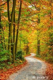 autumn forest wall mural pixers we