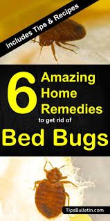 6 home remes to get rid of bed bugs quickly with detailed pictures and recipes
