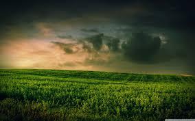 grass field. Wide Grass Field