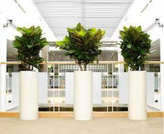 tall office plants. You Can Contact This IndoorPlantRentingService To Have Any Beautiful Looking Indoor Plant Tall Office Plants N