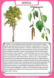 РАЗВИТИЕ РЕБЕНКА Строение Дерева Листья Деревьев  Строение Дерева Листья Деревьев