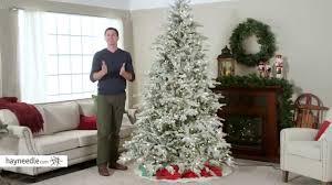 Alberta Spruce Christmas Tree  Tree ClassicsPre Lit Spruce Christmas Tree