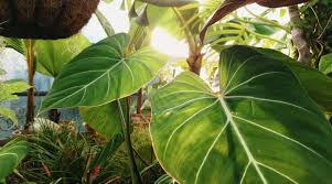 Why Are Plants Green? To Reduce the Noise in Photosynthesis. | Quanta  Magazine