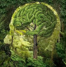 """Résultat de recherche d'images pour """"nature"""""""