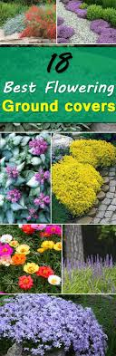 18 Best Flowering Ground Cover Plants