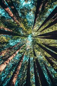 hd photography nature.  Nature Low Angle Photography Of Trees At Daytime To Hd Photography Nature