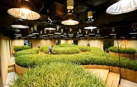 office gardening.  Gardening Gardens Inside Office Gardening