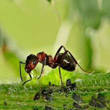 7 ways to get rid of ants in the garden