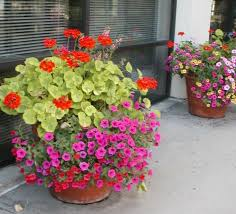 Container Garden PlansContainer Garden Plans Flowers