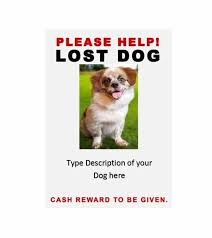 Dog Flyer Template Free Lost Pet Flyer Template Lost Animal Flyer Berabdglevco Free Ldlm Info