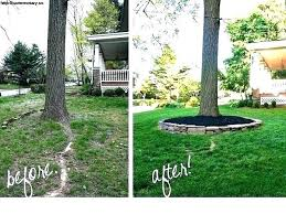 Tree landscaping ideas Residential Palm Tree Front Yard Palm Tree Landscape Ideas Front Yard Tree Landscaping Ideas Great Trees Front Toscanalandscapingcom Palm Tree Front Yard Awesome Front Yard Tree Landscaping Ideas